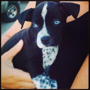 Finnegan Blue Pup